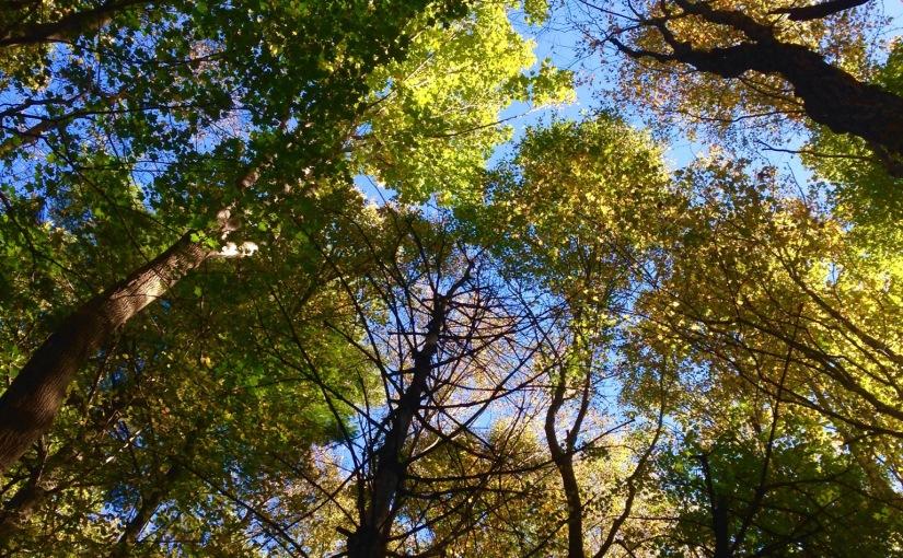 Woods in October
