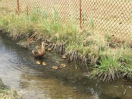 DuckFamily0196Web