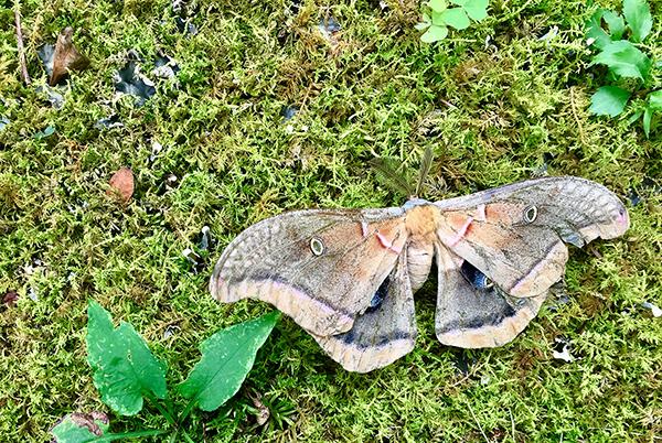 Moth0836Web