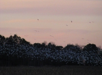 0972-BirdingAtSunset