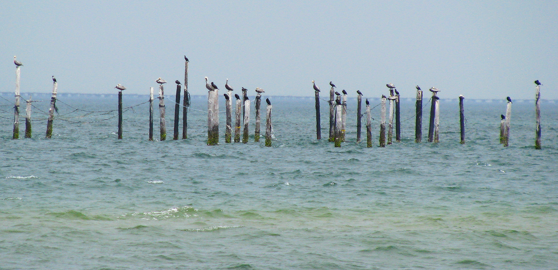 1072-ShorebirdCondo