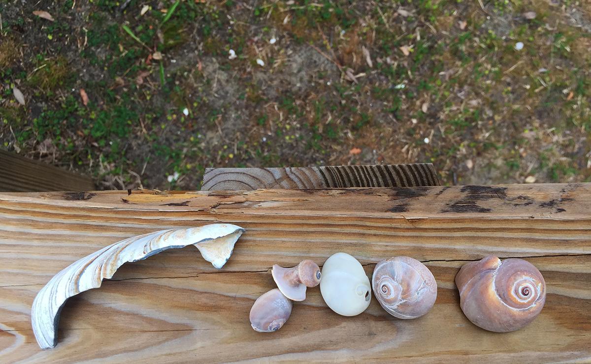 2402-Shells