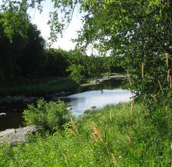 Downriver1165