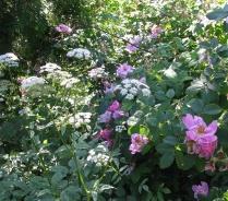 Flowers1216