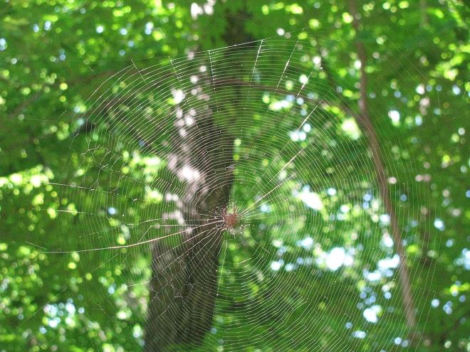 Spider1623