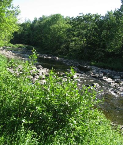 Upriver1164