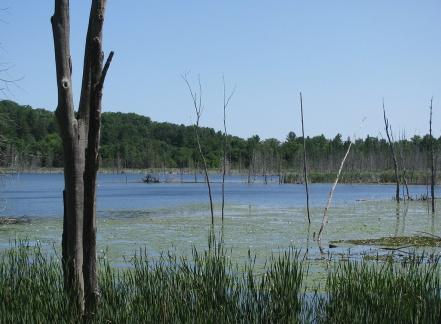 WetlandFrBoardwalk1541
