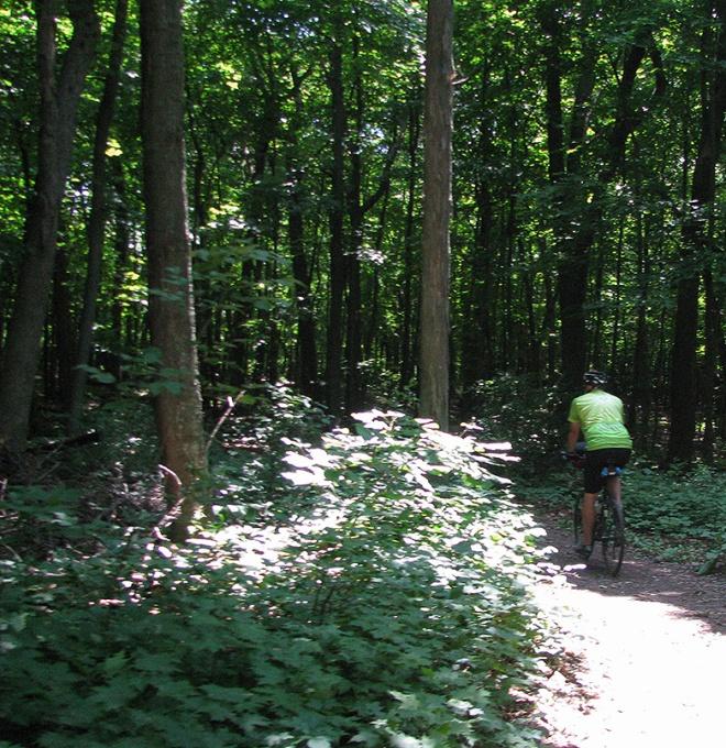 WoodsTrail1637