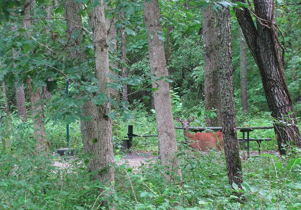 Deer2181