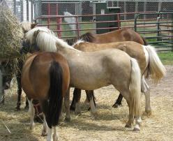 PonyButts2066