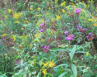 Wildflowers2438