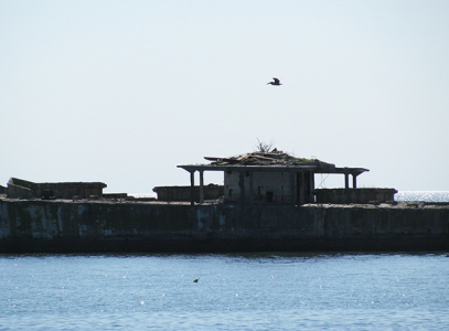 Pelican flies over an osprey nest on a cement ship