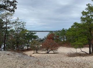 View from Sugarloaf Dune