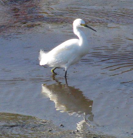 WaterbirdReflection3214Web
