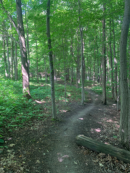 TrailBehindSite134-0889Web